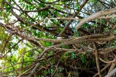 Una fine su del tordo dell'uccello con l'insetto in becco Fotografia Stock Libera da Diritti