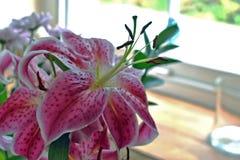 Una fine su di alcuni gigli colorati bello rosa con i petali macchiettati, i fiori è situata davanti ad una finestra fotografia stock libera da diritti