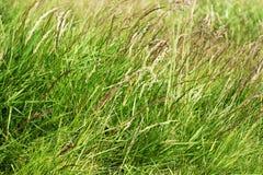 Una fine su di erba verde alta Immagini Stock Libere da Diritti