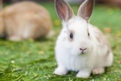 Una fine su di un coniglio di coniglietto sveglio Fotografia Stock