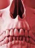 Una fine in su di un cranio umano nel colore rosso Fotografie Stock Libere da Diritti