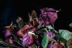 Una fine su di un mazzo di rose morte contro un fondo nero fotografia stock libera da diritti