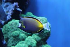 Una fine subacquea sulla foto del pesce in mare fotografia stock