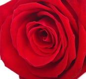 Una fine sul macro colpo di una rosa rossa immagini stock