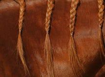 Una fine sulla vista della criniera di un cavallo dell'acetosa in trecce Fotografia Stock Libera da Diritti