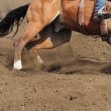 Una fine sulla vista di una sporcizia corrente veloce di volo e del cavallo fotografia stock libera da diritti