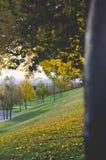 Una fine sulla vista lunga della corteccia di alberi sopra la città fotografia stock