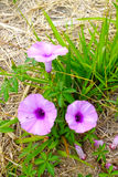 una fioritura di 3 fiori Immagine Stock Libera da Diritti
