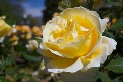 Una flor Foto de archivo libre de regalías