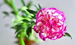 Una flor Fotografía de archivo libre de regalías
