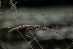 Una flor Imagen de archivo