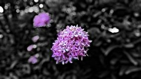 Una flor Fotos de archivo libres de regalías