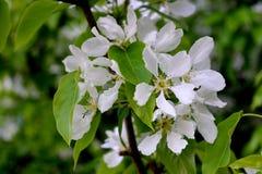 Una flor Imagenes de archivo
