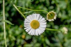 Una flor Fotos de archivo