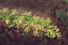 una flor amarilla imagen de archivo libre de regalías