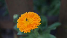 Una flor anaranjada Imágenes de archivo libres de regalías