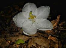 Una flor blanca foto de archivo
