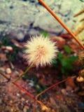 Una flor blanca Fotos de archivo