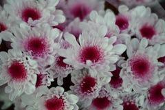 una flor blanca con un coraz?n p?rpura fotos de archivo libres de regalías