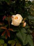 Una flor blanca entre hierbas y nuevos brotes imagen de archivo libre de regalías