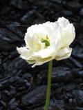Una flor blanca no identificada hermosa en un fondo de madera de la corteza imagenes de archivo