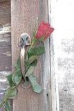 Una flor color de rosa con la sombra se inserta en la manija de cobre amarillo de la puerta Imagen de archivo