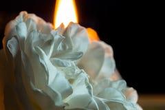 Una flor color de rosa floreciente con los pétalos blancos, en un fondo negro y una vela que queman detrás Macro fotos de archivo