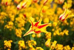 Una flor colorida Fotos de archivo