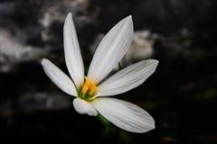 Una flor con lluvia y el sol Imágenes de archivo libres de regalías