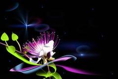 Una flor de hadas Imagenes de archivo