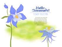 Una flor de la aguileña en un fondo verde de la acuarela Las flores libre illustration