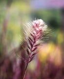 Una flor de la hierba Foto de archivo