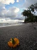 Una flor de la naranja descansa sobre las playas arenosas del parque de Edgewater - Cleveland - Ohio Imagen de archivo