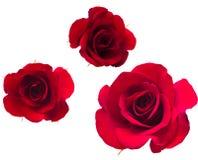 Una flor de rosas. Foto de archivo
