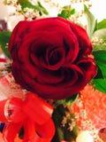 Una flor del amor Imagen de archivo libre de regalías