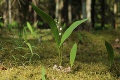 Una flor del bosque Fotos de archivo libres de regalías
