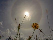 Una flor del diente de león y alguna hierba imagen de archivo