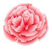 Una flor del rosa del clavel Fotografía de archivo libre de regalías