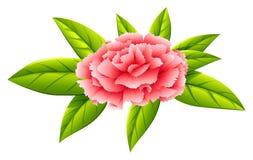Una flor del rosa del clavel Foto de archivo