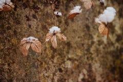 Una flor delicada marchitada en el jardín en un día escarchado frío durante nieve blanca que cae foto de archivo