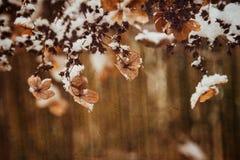 Una flor delicada marchitada en el jardín en un día escarchado frío durante nieve blanca que cae imagen de archivo