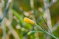 Una flor en descensos del cierre del rocío para arriba Fotos de archivo libres de regalías
