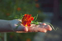 Una flor en el kid& x27; mano de s Fotografía de archivo