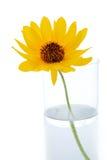 Una flor en florero Imagen de archivo libre de regalías