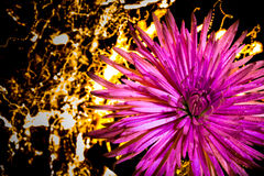 Una flor en las luces Imagenes de archivo
