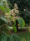 Una flor en un paraíso foto de archivo libre de regalías