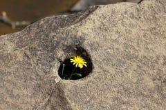 Una flor en una piedra Imagenes de archivo