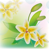 Una flor es un lirio Fotos de archivo