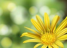 Una flor floreciente Fotos de archivo