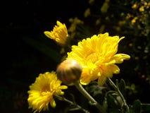 Una flor floreciente en atumn Imagenes de archivo